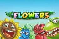 Flowers
